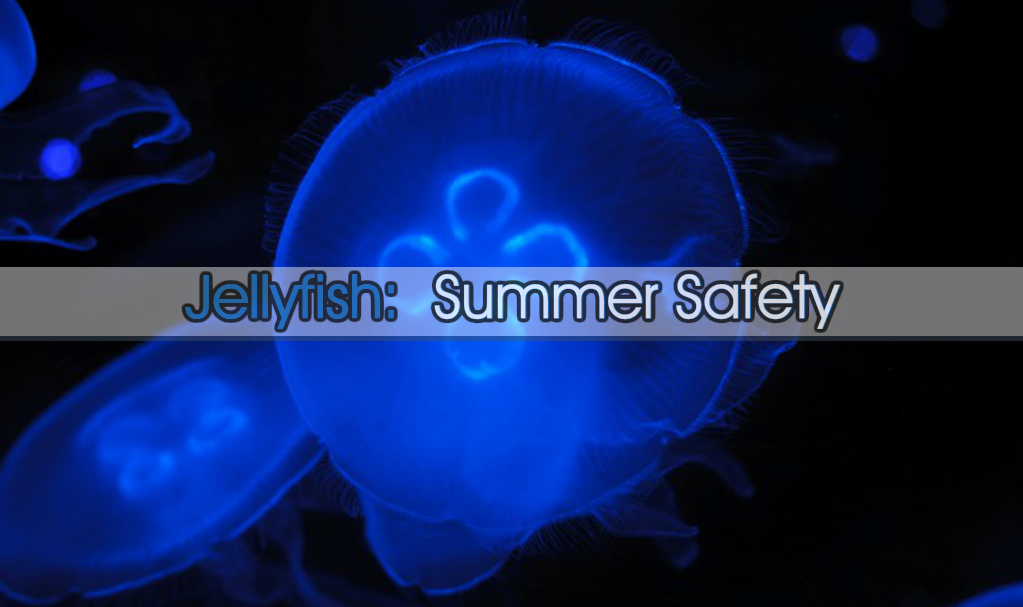 JELLYFISH: SUMMER SAFETY